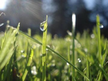 Ashley Schultz - Rain Drop on Grass